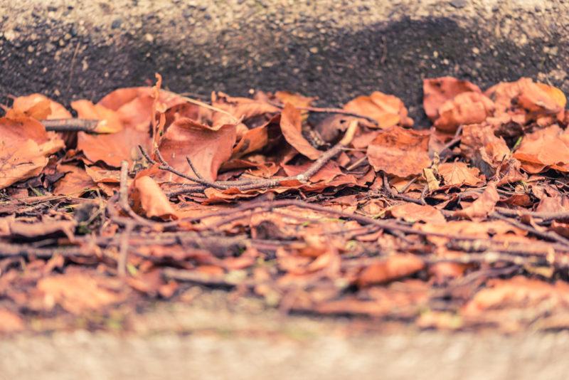 Orange Leaves on the Street : Fall/Autumn