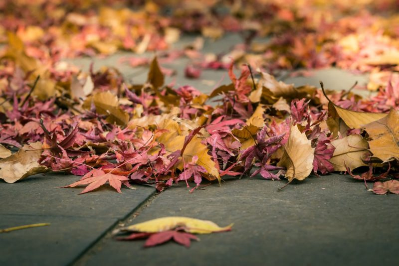 Colorful Autumn Fallen Leaves