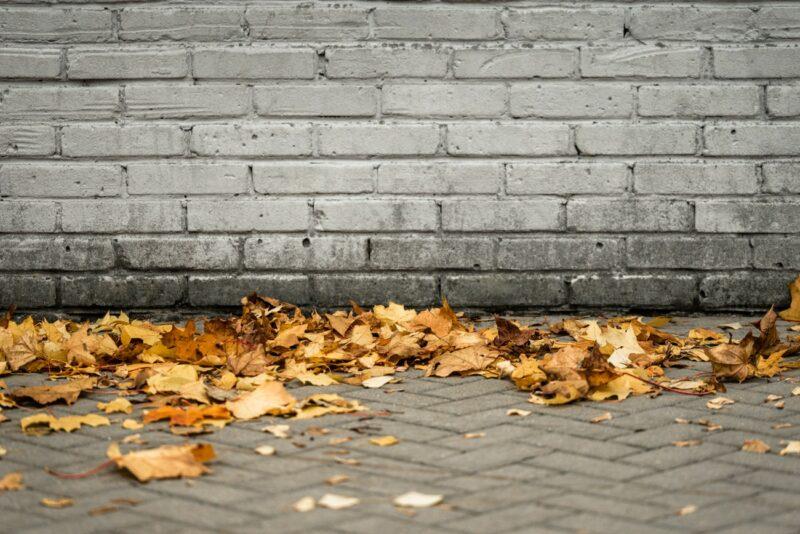 Fallen Leaves on a Sidewalk