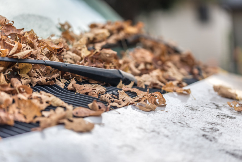 van covered with leaves and a wiper
