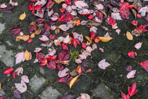 red, orange leaves on the ground