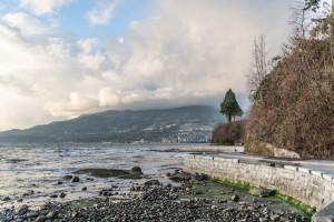 Ocean, tree & Vancouver Seawalk.