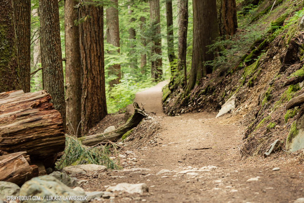 Garibaldi Provincial Park Forest Trail
