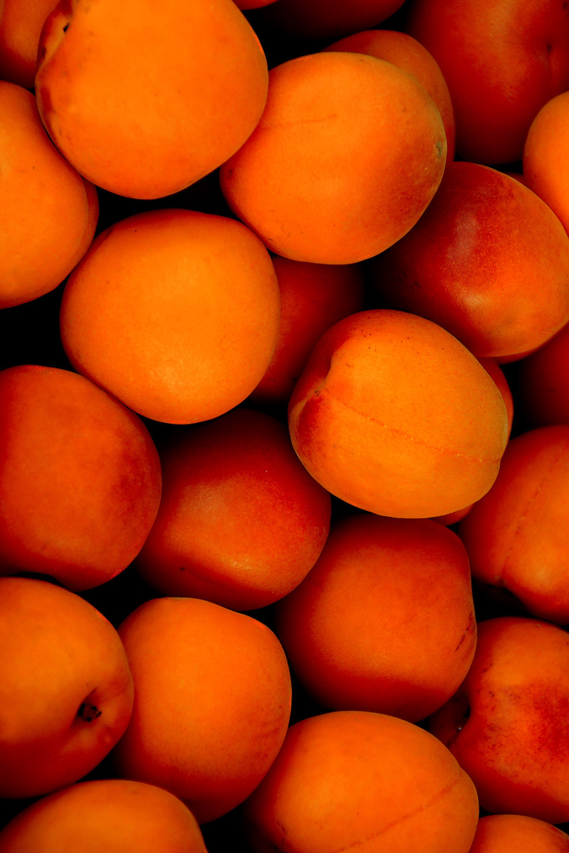 Many apricots closeup look