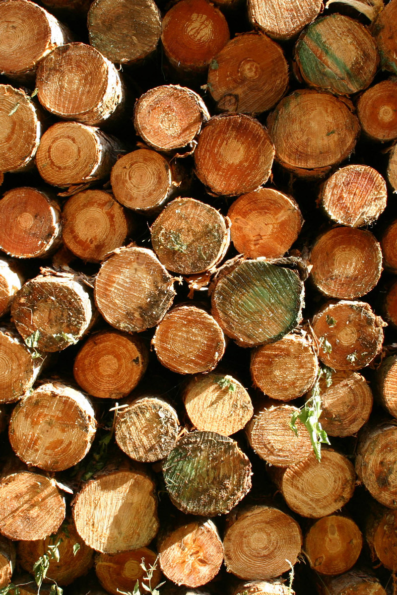 Pile of cut wood logs in sunlight
