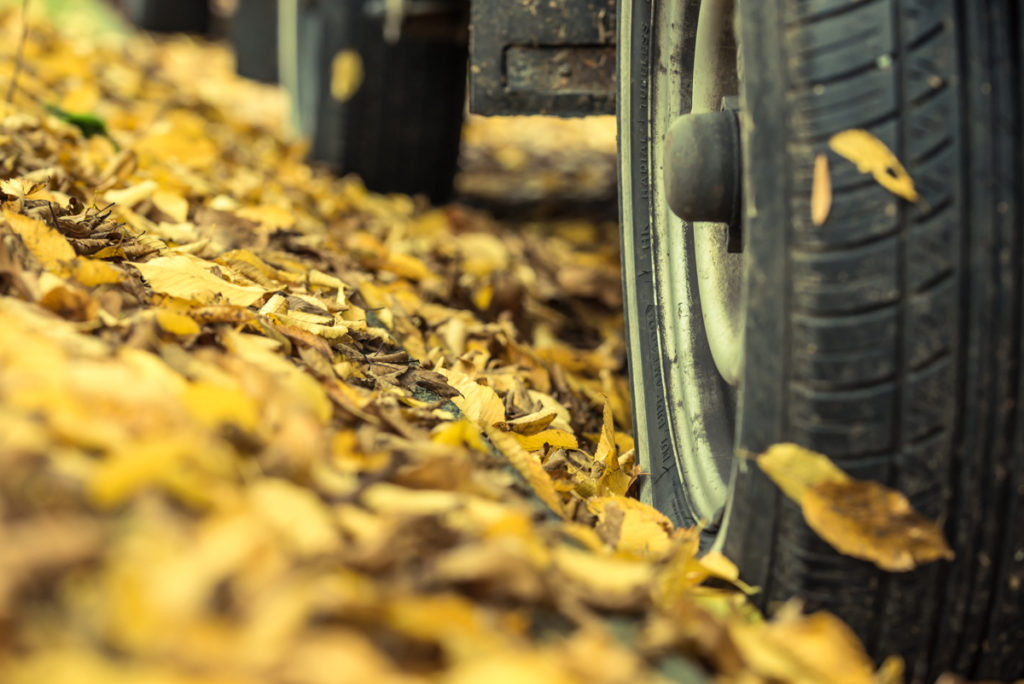 free picture of fall leaves & car tire