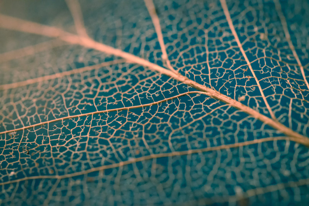 Decomposed Leaf : Picture for Your Blog