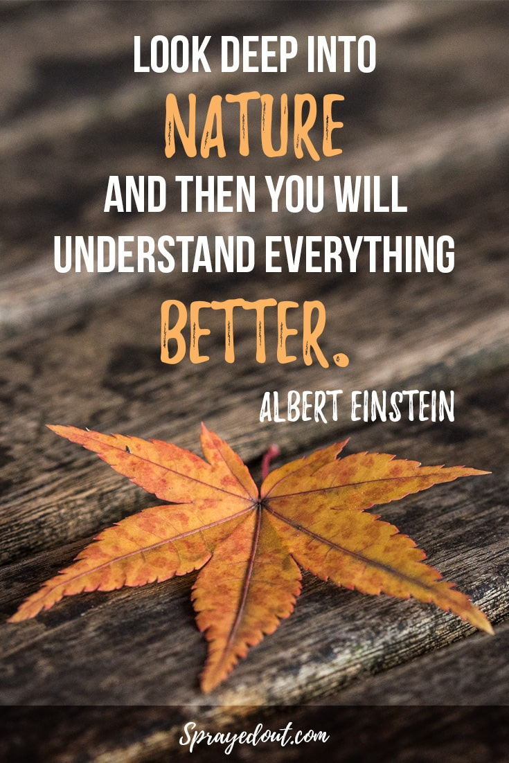 Albert Einstein Quote About Nature.