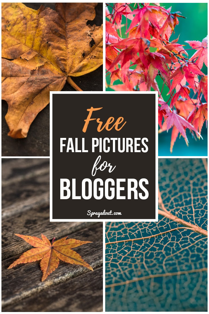 Free Fall Pictures for Bloggers
