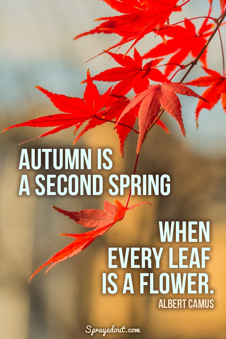 Albert Camus quote about autumn.