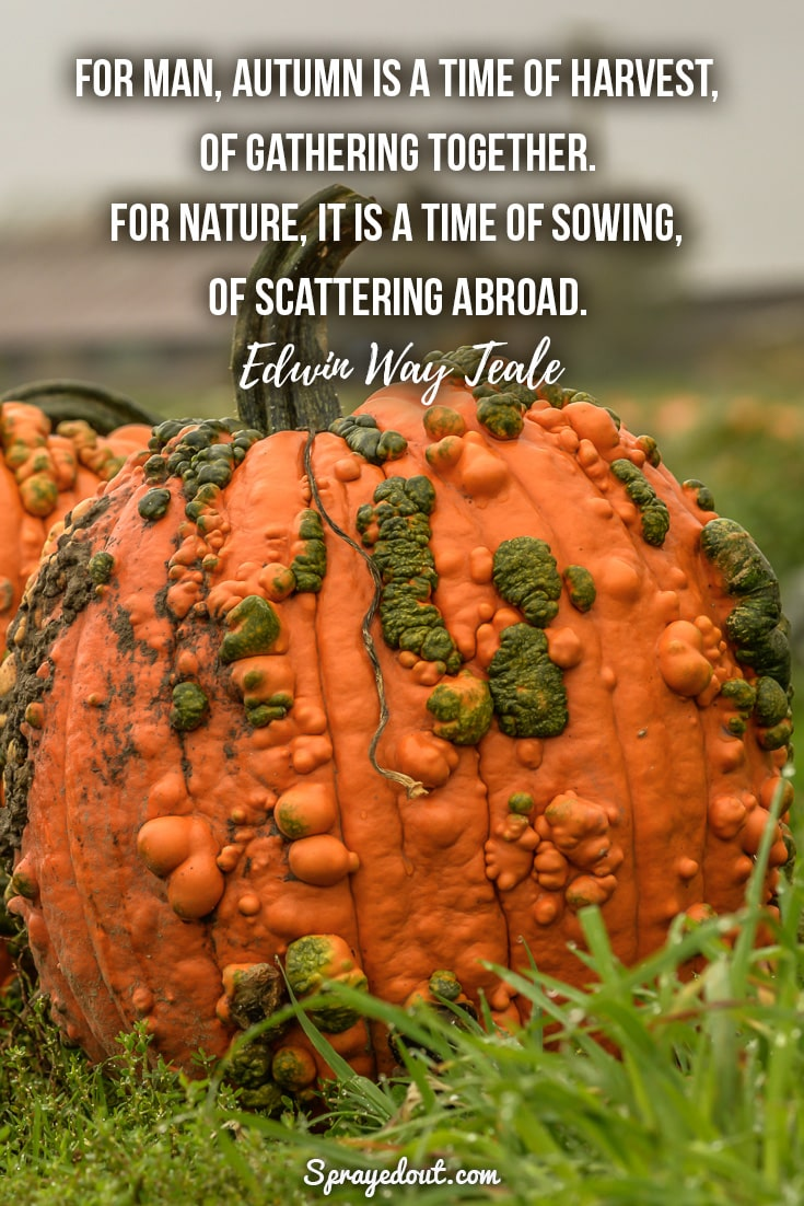 Edwin Way Teale quote about autumn.