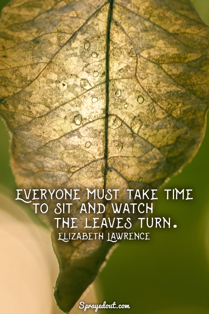 Elizabeth Lawrence quote about leaves.