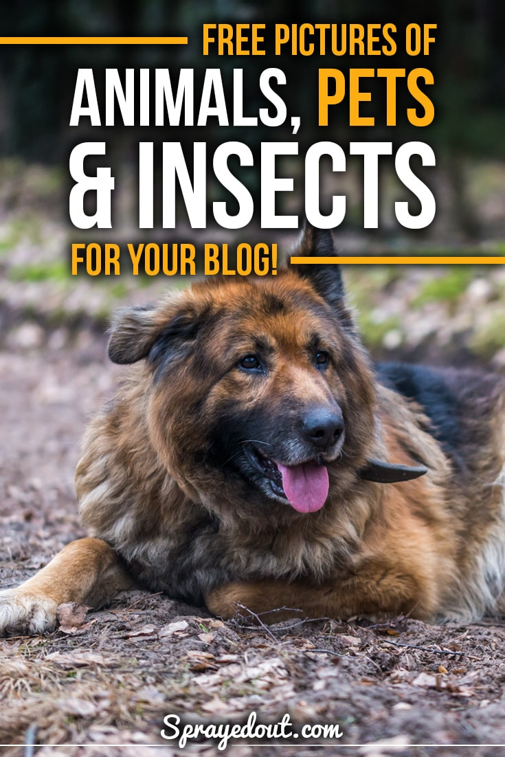 Free Pictures of Animals, Pets & Insects for Your Blog.