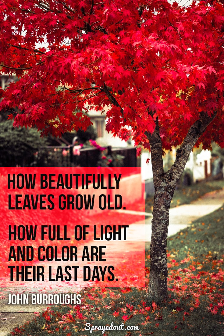 John Burroughs quote about autumn leaves.