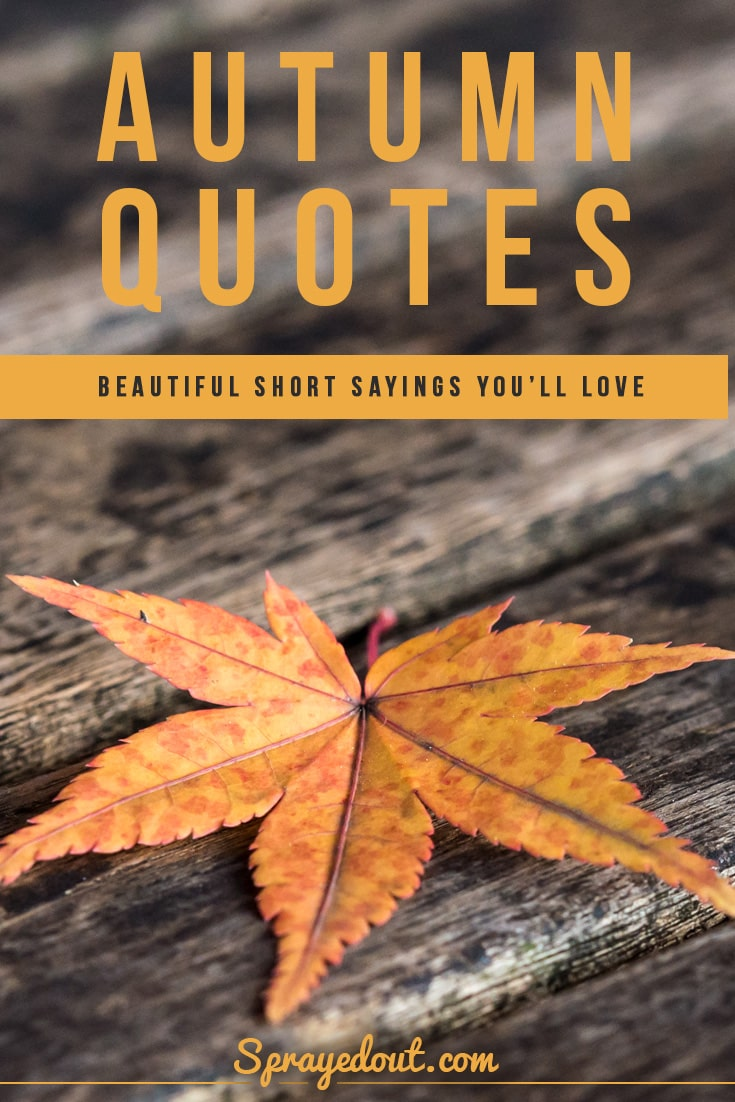 Autumn Quotes Short Sayings To Make You Fall In Love With Leaves