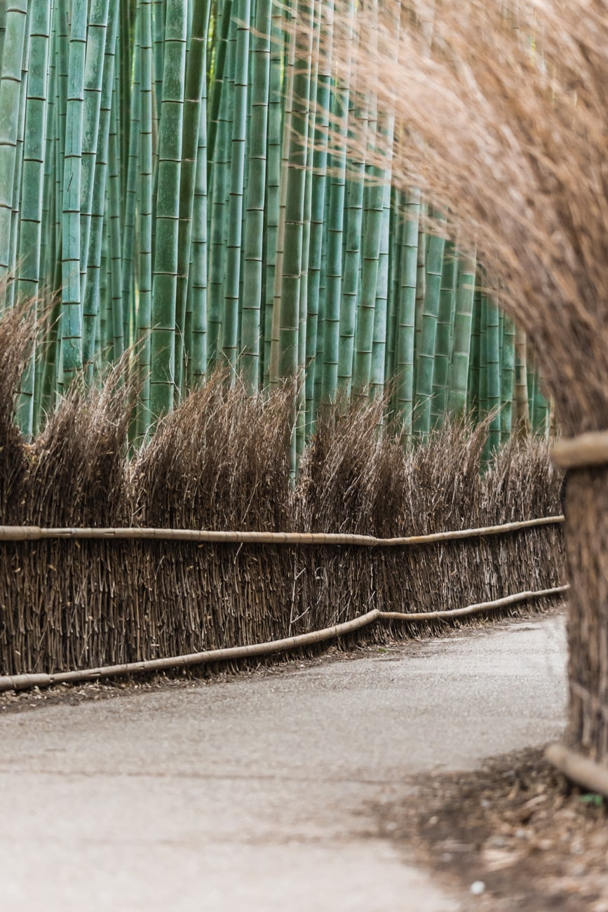 Arashiyama in Japan: Bamboo Grove Alley