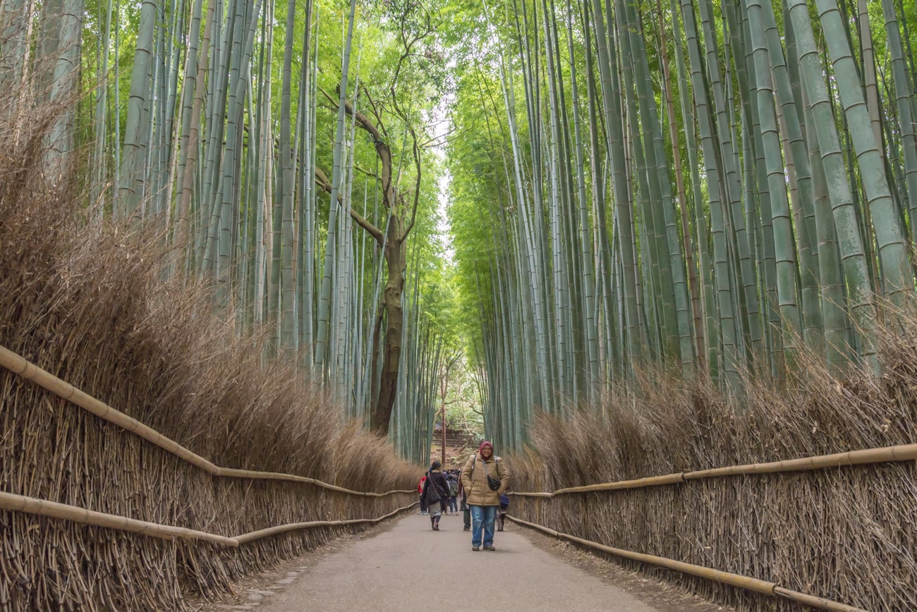 Famous Bamboo Alley in Arashiyama.