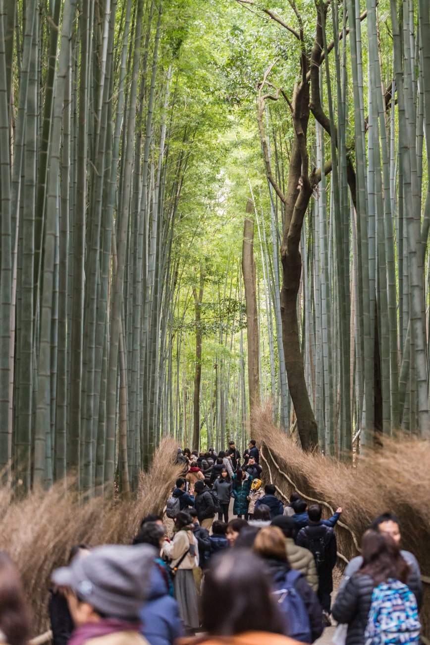 Bamboo Grove in Arashiyama, Japan full of people.