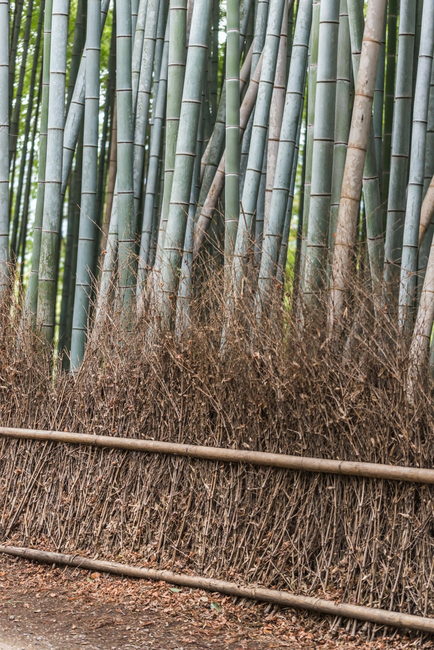 Bamboos in Arashiyama