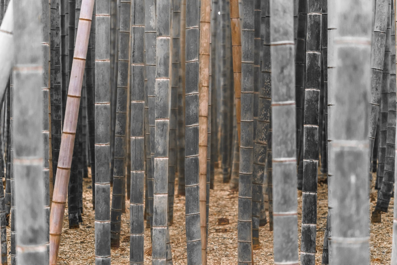 Desaturated Bamboos in Arashiyama, Japan