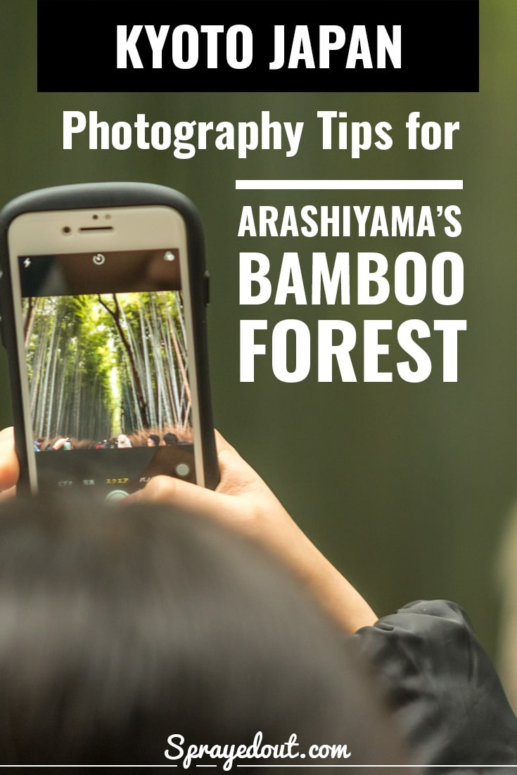 A person taking a picture on her cellphone of Bamboo Grove in Arashiyama district of Kyoto.