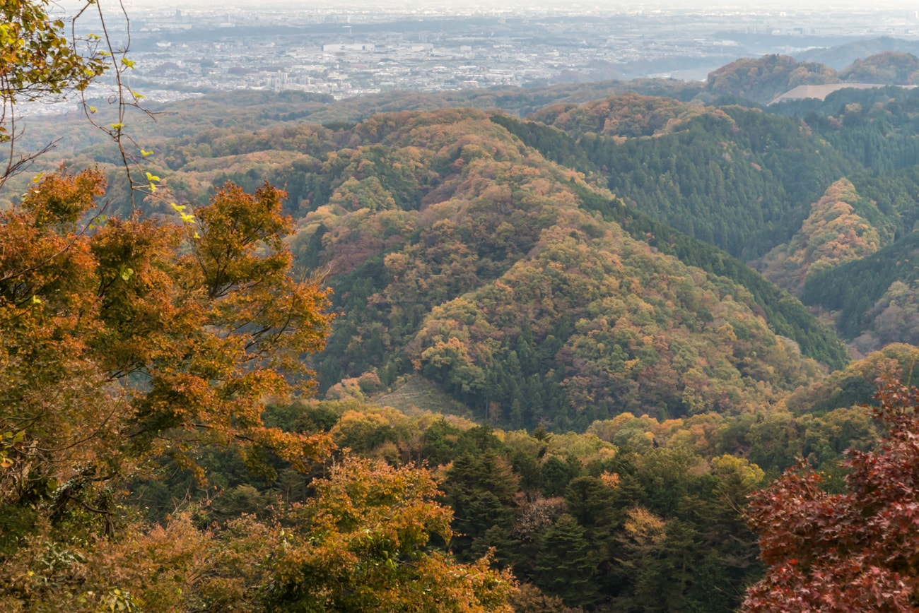 Mt. Takao: Autumn trees landscape.