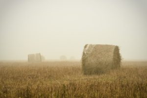 Hay Bales Landscape on a Foggy Day