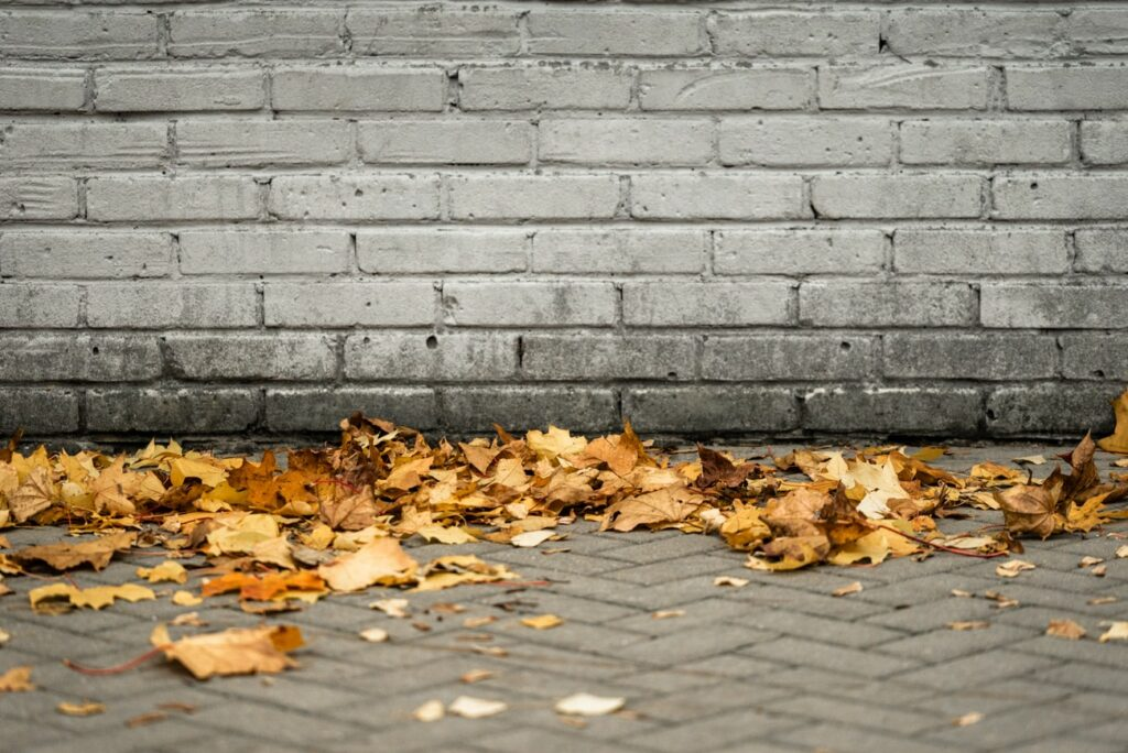 Fallen Leaves on a Sidewalk, free picture for your blog or web article.
