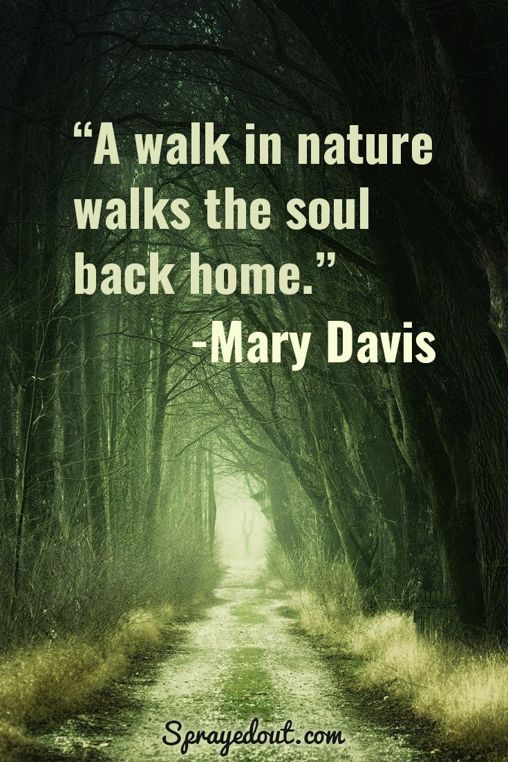Mary Davis Quote about walking in nature.