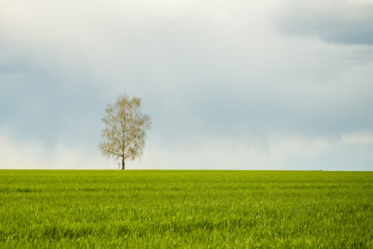 Beauty in nature summer landscape. Countryside birch tree and a cross surrounded by green grass and sky.